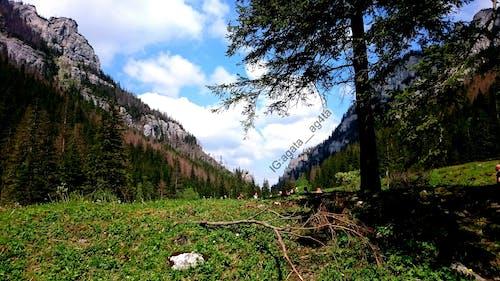 Kostenloses Stock Foto zu #baum, #bäume, #grün, #polen