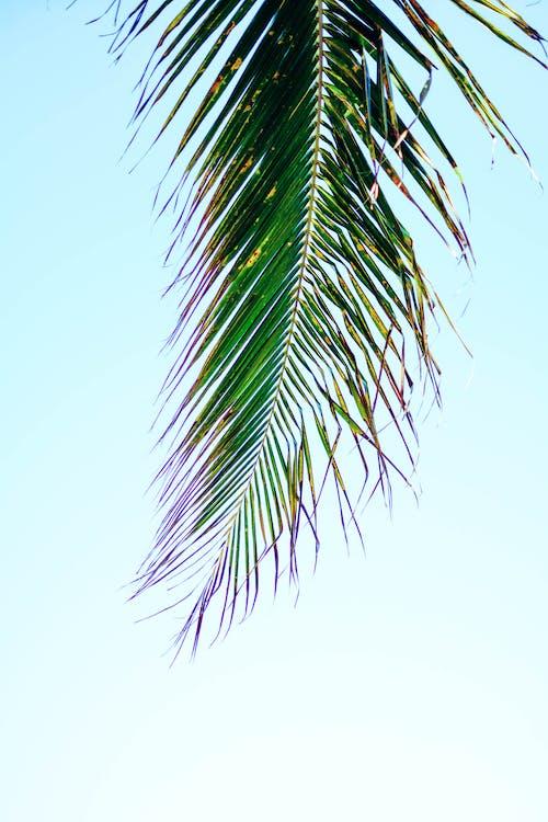 beach, caribbean, coconut