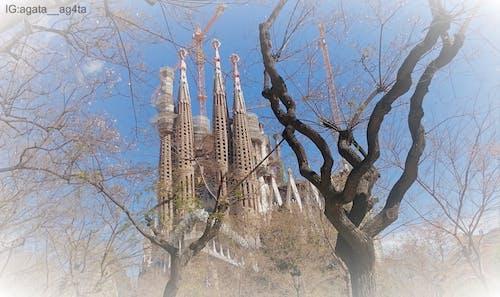 Kostenloses Stock Foto zu antonio gaudi, barcelona, baum
