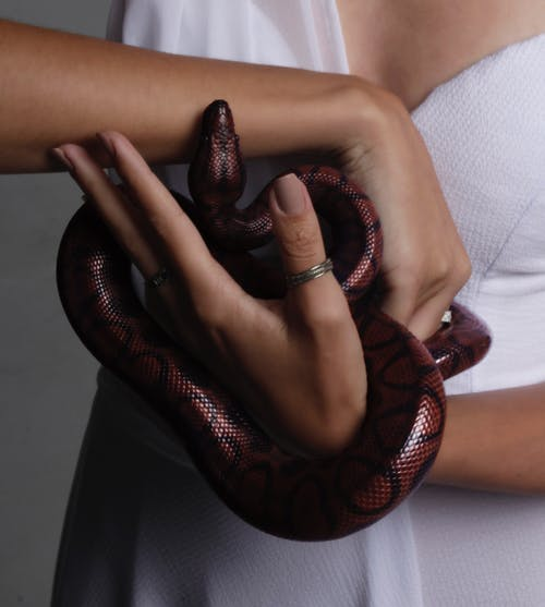 Photo of Person Holding Snake