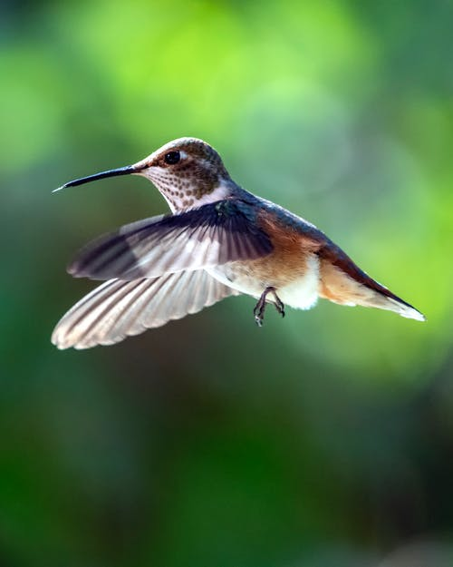 Close-Up Photo of Hummingbird