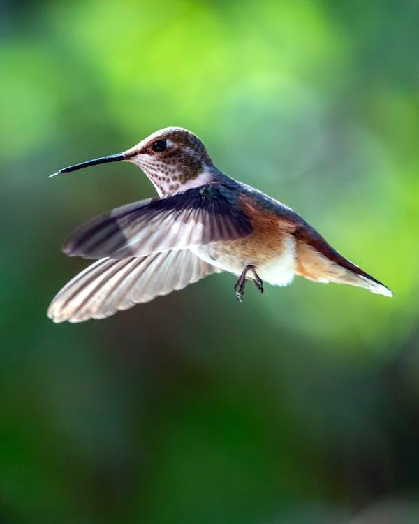 Close-Up Photo of Hummingbird