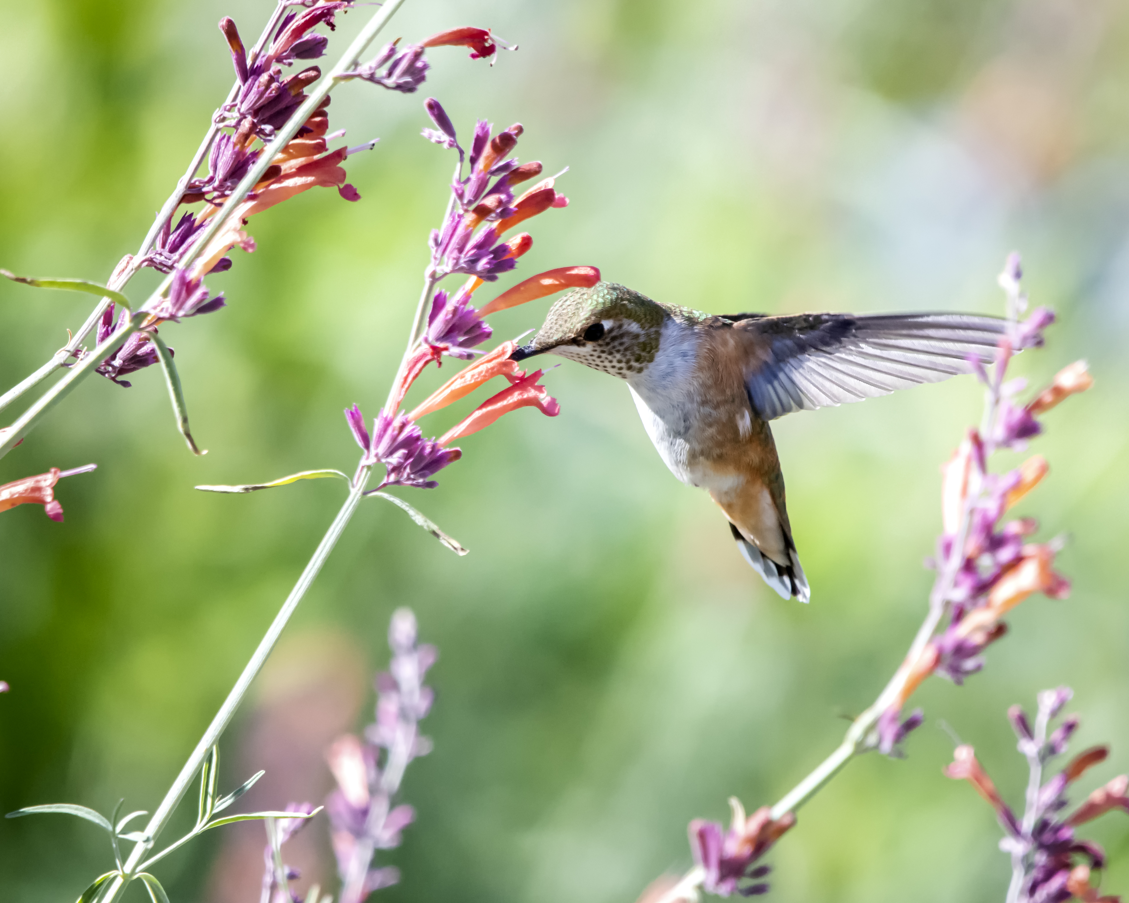 Close-Up Photo of Hummingbird Near Flowers