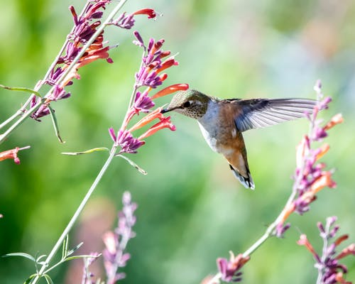 Close-Up Photo of Hummingbird Near Flowers