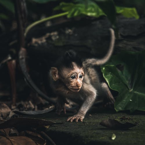 Photo of Young Macaque