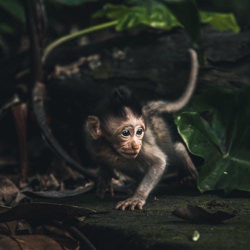 Δωρεάν στοκ φωτογραφιών με άγρια φύση, άγριο ζώο, αλέθω, άλεσμα