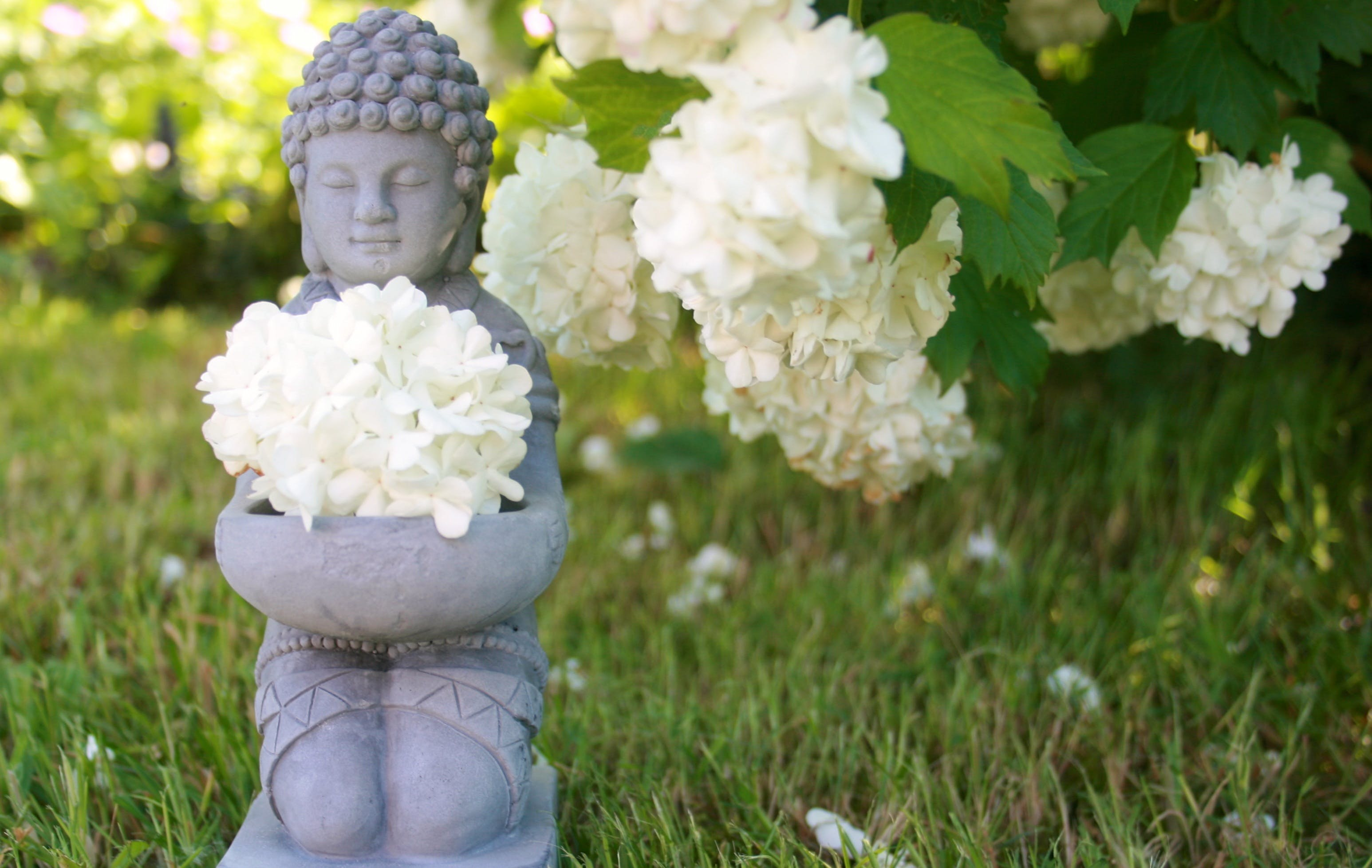 Free stock photo of nature, relaxation, yoga, wellness