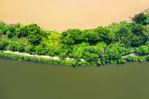 Top View Photo of Green Trees Near Body of Water