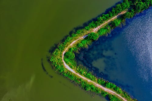 Aerial Photography of Body of Water Near Trees