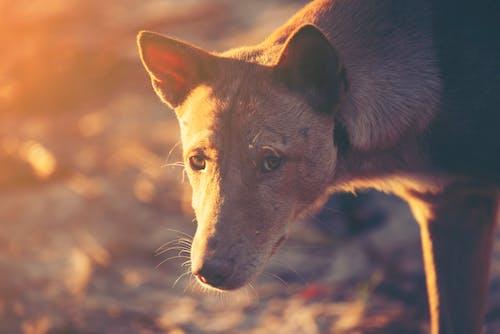 Free stock photo of adorable, animal, background, beach
