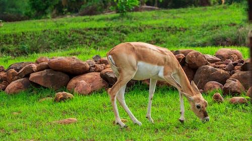 Бесплатное стоковое фото с дикие животные, дикий, дикое животное, лес