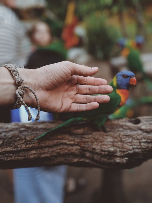 Photo Of Hand Near Parrot