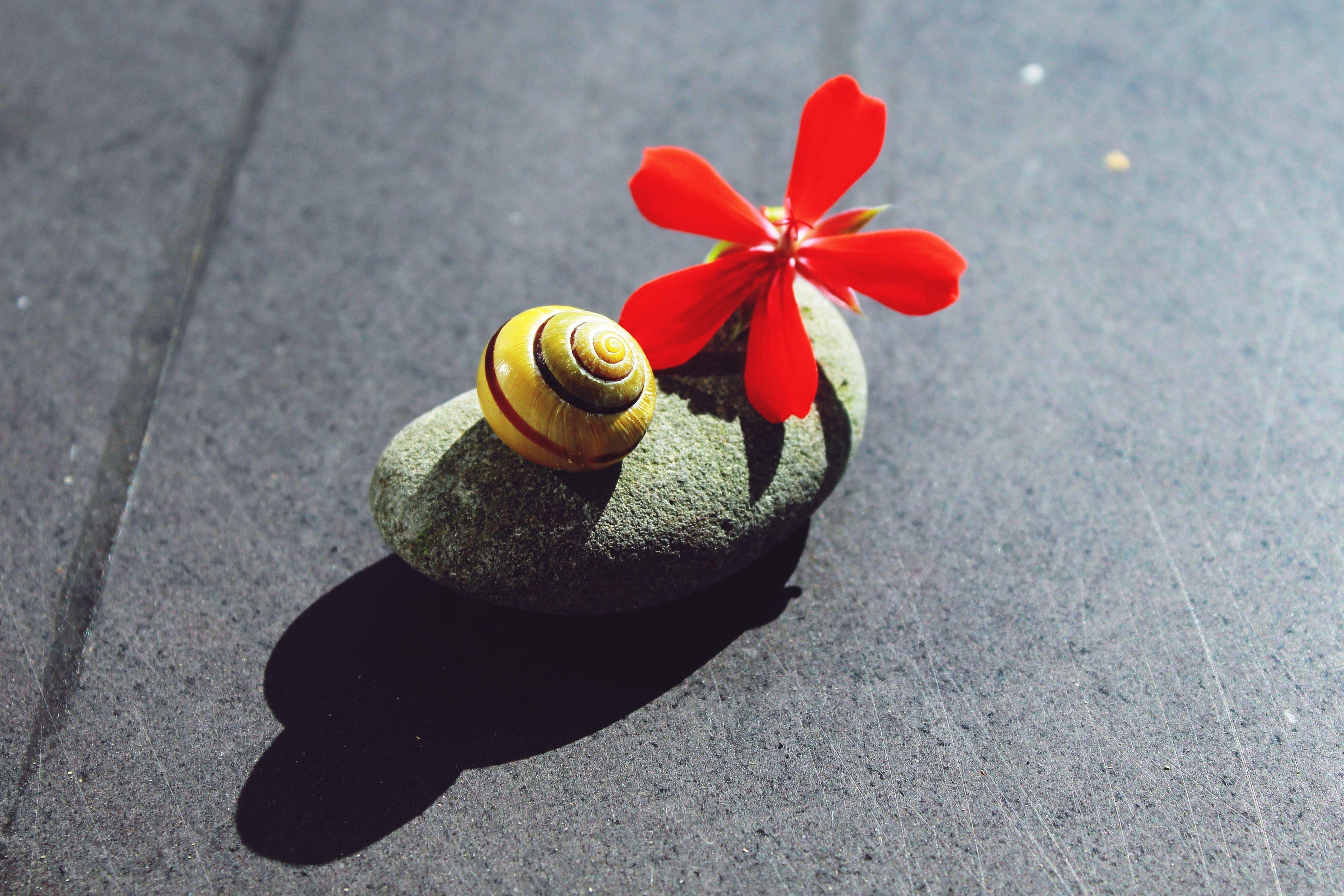 Free stock photo of balance, balanced, bloom, blossom