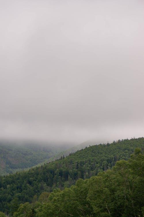 Základová fotografie zdarma na téma den, hora, krajina, les