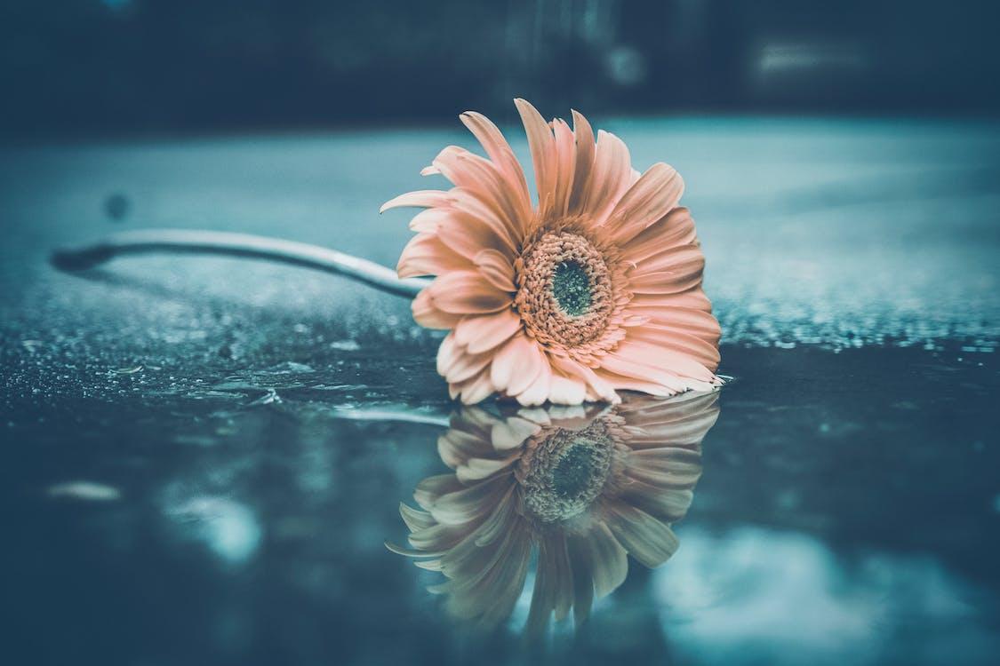 反射, 在水泥地板上的花, 在雨中的花
