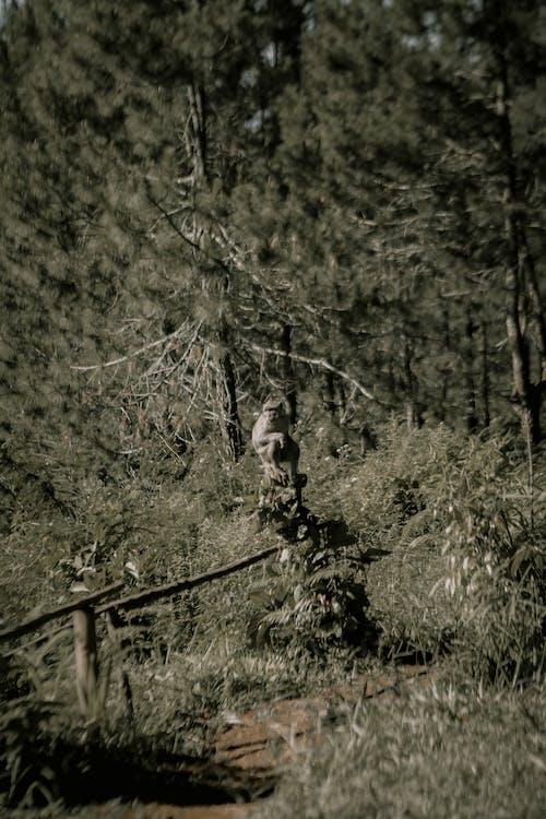 Ilmainen kuvapankkikuva tunnisteilla apina, apinat, eläimen muotokuva, eläin