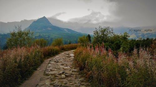 Kostenloses Stock Foto zu bäume, berg, berge