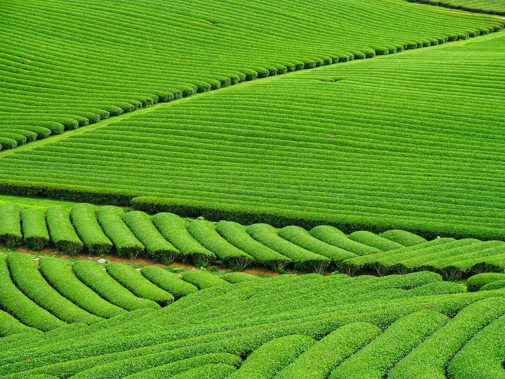 dedinský, farma, flóra