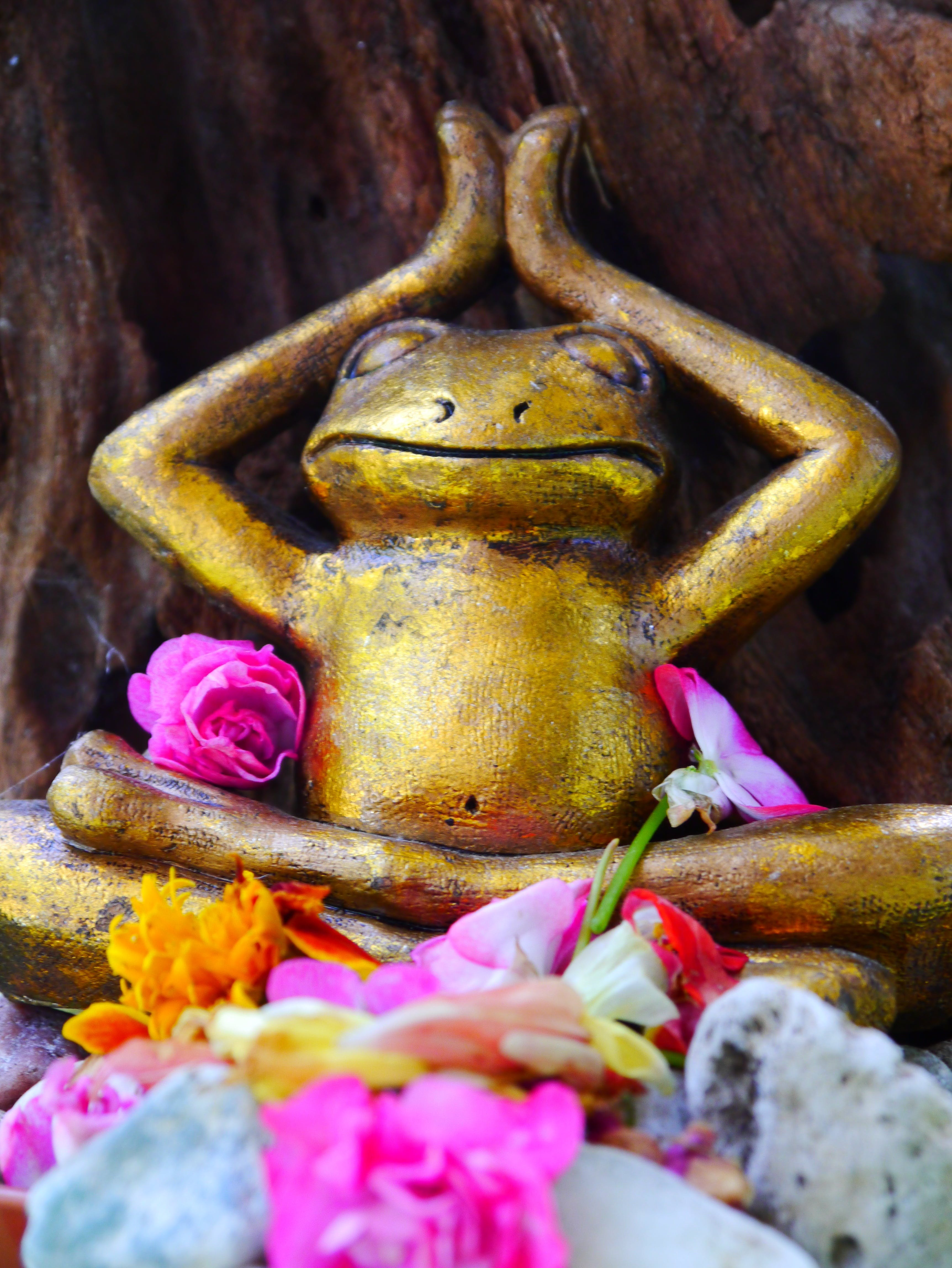 Free stock photo of flowers, sculpture, yoga, frog