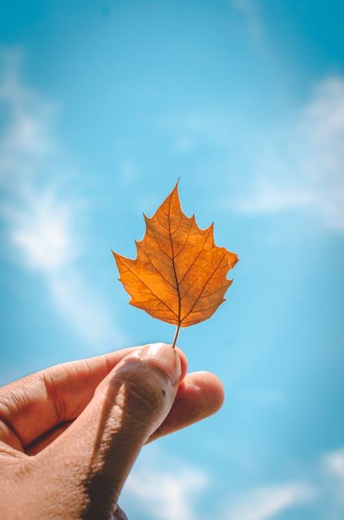 düşmek, el, güz, sonbahar içeren Ücretsiz stok fotoğraf