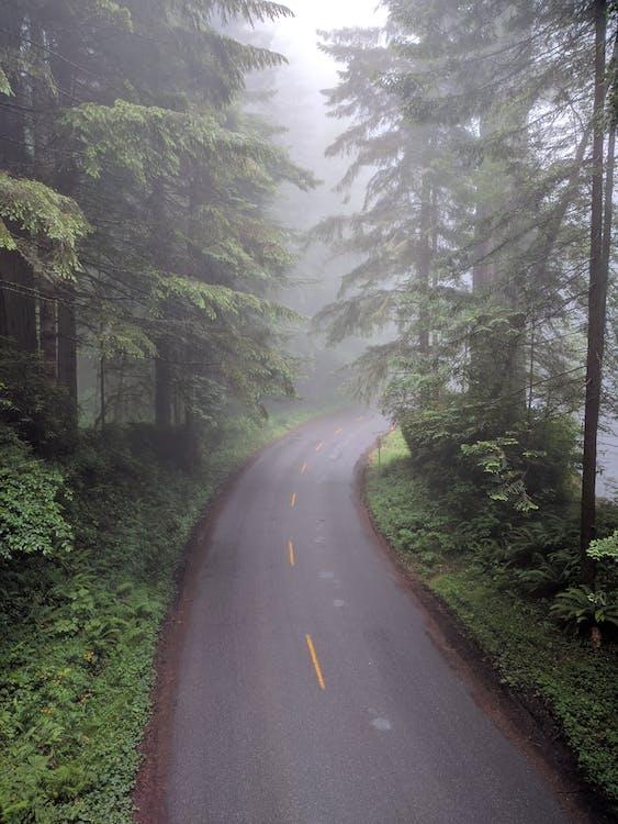 asfalt, bomen, koud weer