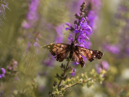 Free stock photo of butterflies, flower, summer, wildflowers