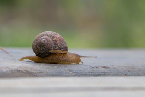 蝸牛, 蝸牛殼 的 免费素材照片