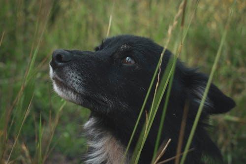 Foto stok gratis anjing, anjing hitam, binatang, hari
