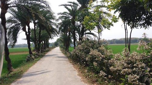 Free stock photo of road, tree, village road