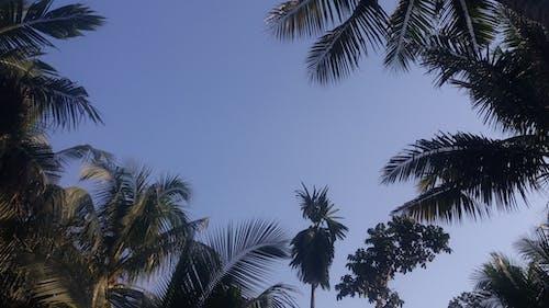 Free stock photo of blue sky, sky, tree