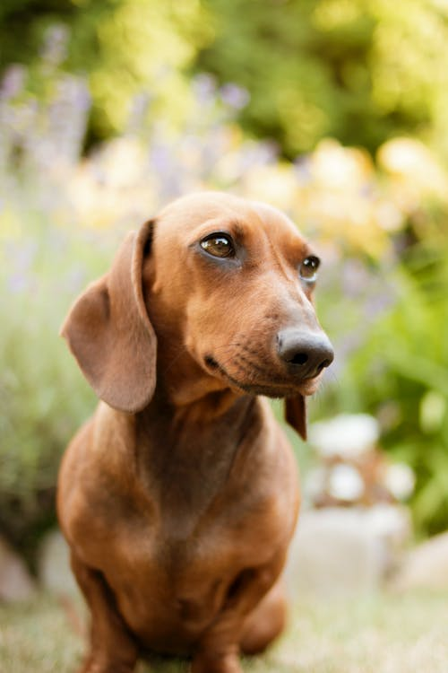 Free stock photo of animal portrait, dog, flowers