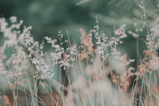 Free stock photo of nature, flowers, grass, plants