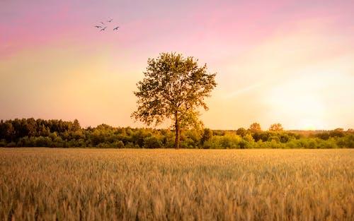 Free stock photo of apple tree, countryside, meadow, sky