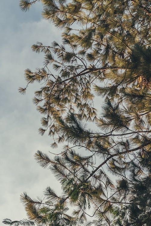 Základová fotografie zdarma na téma analogový, céu, klasický, obloha