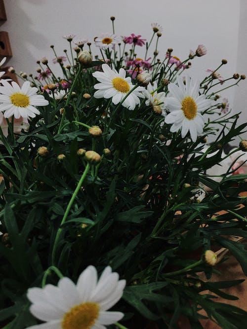 Безкоштовне стокове фото на тему «барвистий, всередині, дім, квіти»
