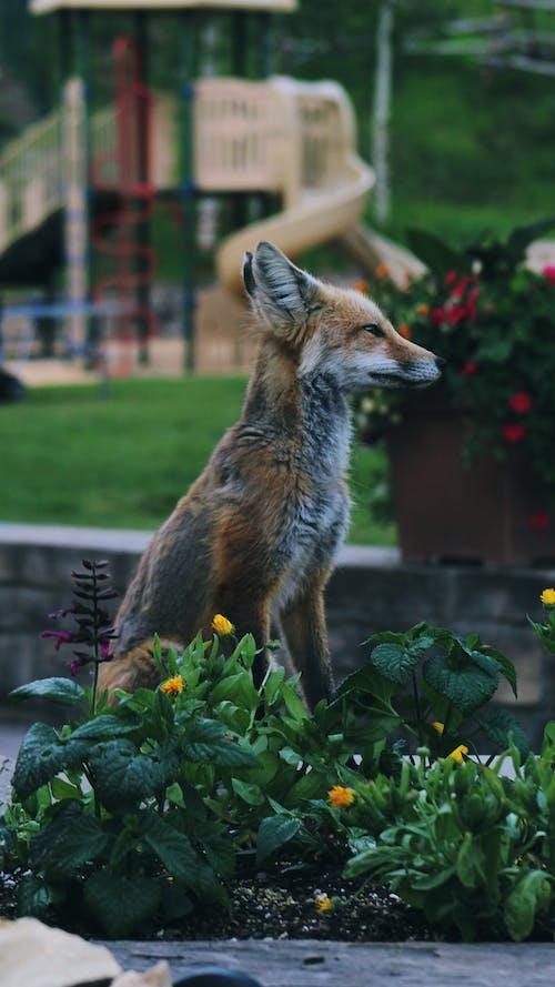動物, 可愛, 哺乳動物, 捕食者 的 免费素材照片