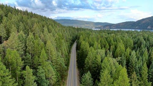 Foto d'estoc gratuïta de a l'aire lliure, arbres, arbres de coníferes, autopista