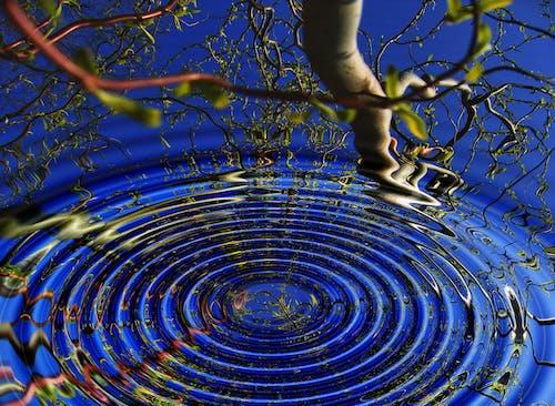 Foto d'estoc gratuïta de aigua, arbre, art, branques