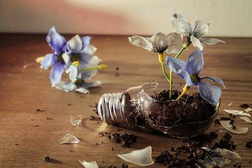 Foto stok gratis bunga biru, gagasan, gelas pecah