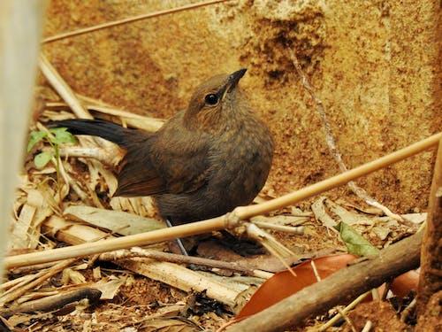 Ingyenes stockfotó aranyos madár, bambusz, bambusz bot, bambuszfa témában