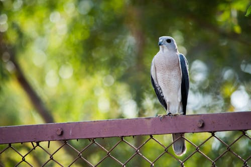 Photo of Bird Perched On Fence