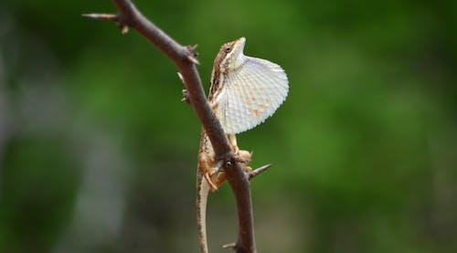 Бесплатное стоковое фото с ящерица