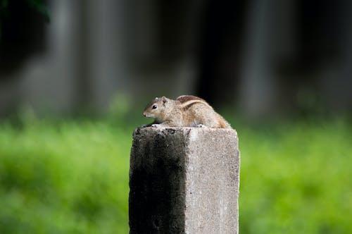 Foto d'estoc gratuïta de animal, bufó, esquirol, macro