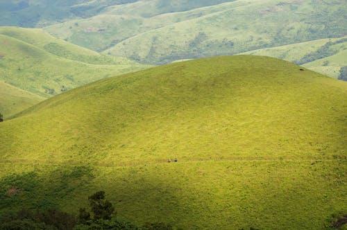 Foto d'estoc gratuïta de bell paisatge, herba, muntanya, pastures