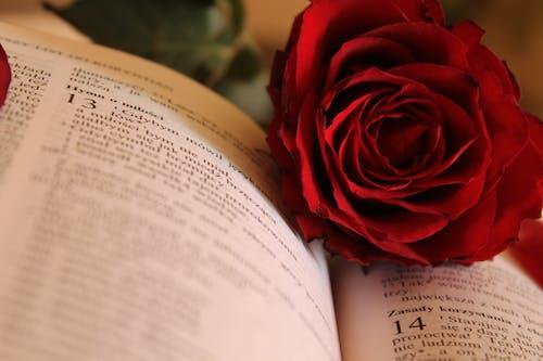 Darmowe zdjęcie z galerii z czytać, kwiat, martwa natura, miłość