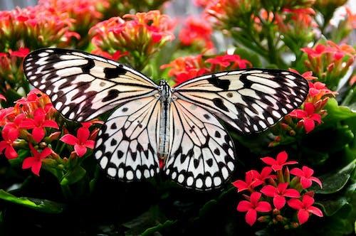Photos gratuites de ailes, brillant, brouiller, centrale