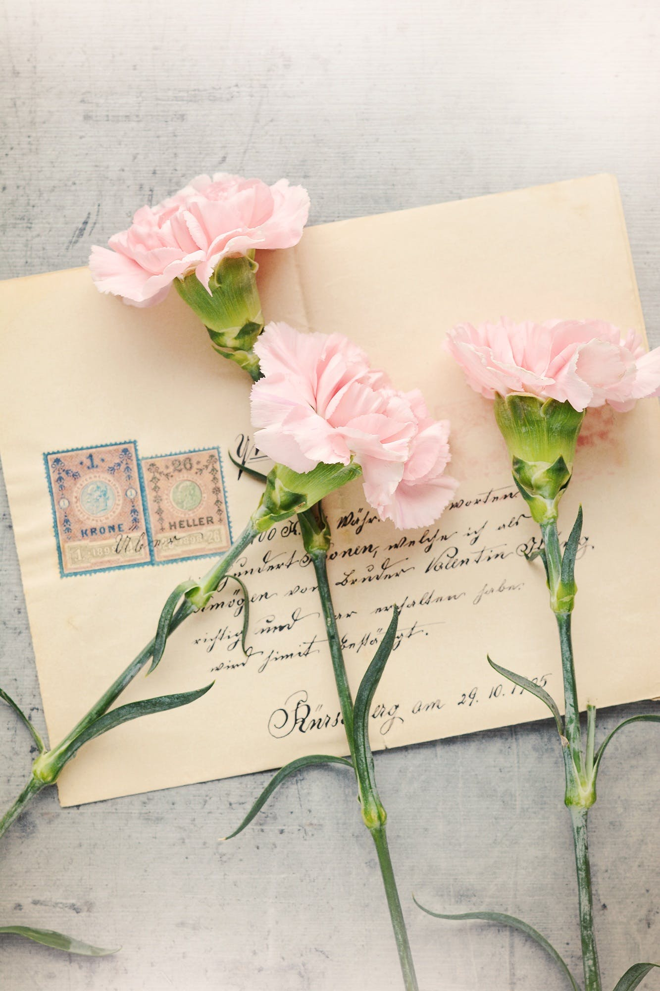 antique, carnation pink, close