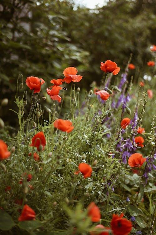 adâncime de câmp, afară, botanic