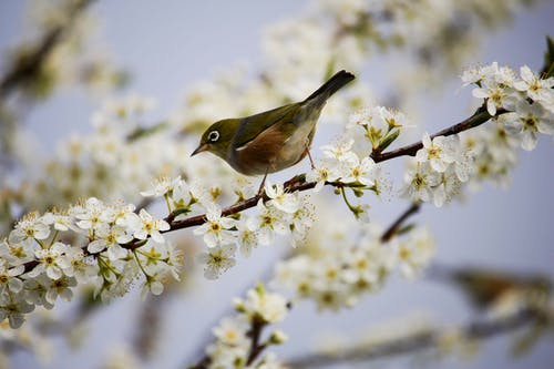Green and White Bird on White Flowers