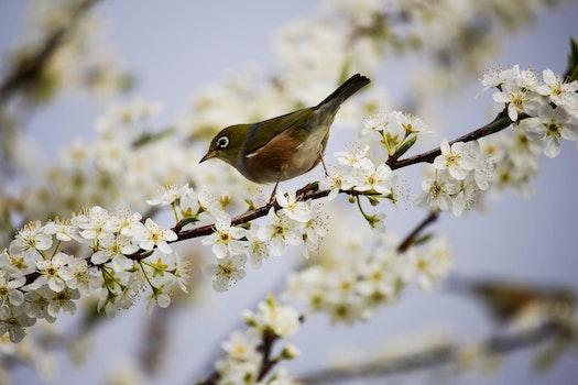 Free stock photo of bird, flowers, garden, petals
